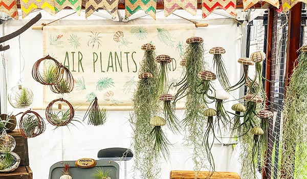 Air Plants Ireland