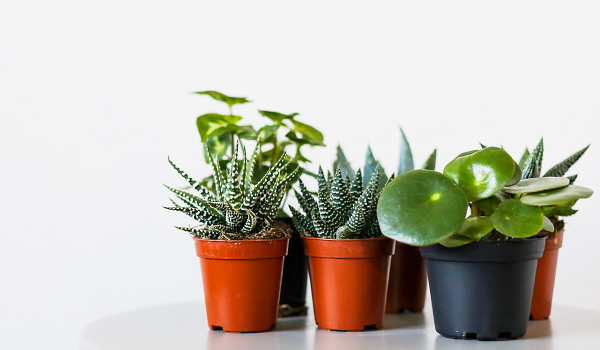 Nicely Plant